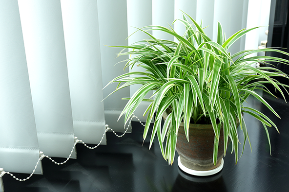 best apartment home houseplants